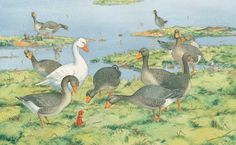 I really like the goose on the left side.  The one who has his head cocked.  He looks like the curious one.   :)  (by Bernhard Oberdieck)