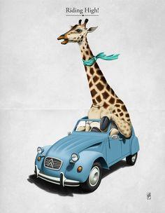 giraffe in a blue 2CV - love it! (http://25.media.tumblr.com/tumblr_m9q9z5vEwN1rnu569o1_500.jpg)