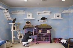 cat shelves | centerpiece of the main cat room is a network of new vertical shelves ...