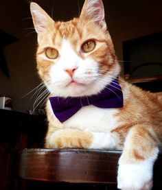 Taco the Orange Tabby Cat | PawNation #catsofinstagram