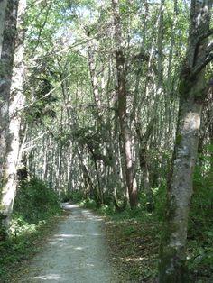 Whidbey Island path    - wDmGallery.com