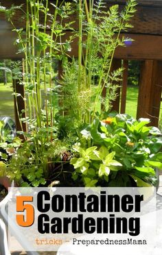 5 Container Gardening Tricks Small garden space – no problem! Container gardening tricks to have … Organic Vegetables, Growing Vegetables, Growing Plants, Growing Tomatoes, Organic Fruit, Small Space Gardening, Small Gardens, Container Flowers, Container Plants