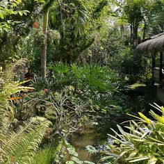 Lunch view. It's a jungle out there.  #MyLifeInBali