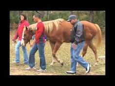 While on WFNC Radio, Heather Wilkerson, LCSW, President of Hope-thru-Horses, Inc. described how decided to use horses in psychotherapy and corporate team bui. Corporate Team Building, Counseling Psychology, Wheelchairs, Medical Advice, Therapy Ideas, Dream Job, Farm Life, Equestrian, Presidents