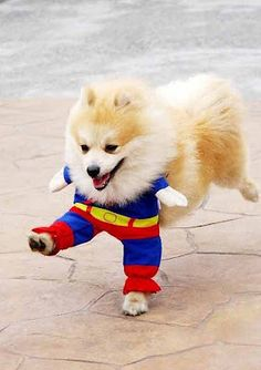 IT'S SUPER PUP!