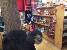One of our favorite bears at Hoss's - he's just a little guy