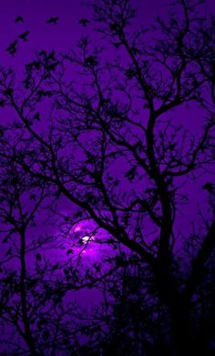 Purple Aesthetic Discover The Color Purple Divinity Lane When Doves Cry Dark Purple Aesthetic, Violet Aesthetic, Lavender Aesthetic, Rainbow Aesthetic, Sky Aesthetic, Aesthetic Colors, Aesthetic Pictures, Purple Aesthetic Background, Dark Purple Background
