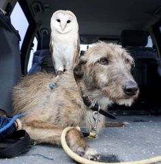 Willow and lurcher Merlin are friends