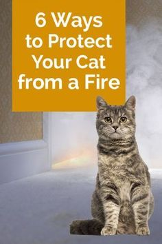 Worried about your pet in an emergency? These helpful tips on how to protect your cat from a fire are a great way to work on prevention and safety for your kitty! Great ideas
