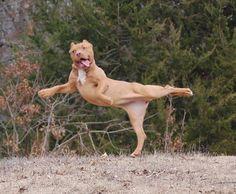 Animal Yoga Masters - 27 Pics