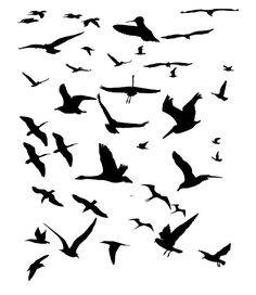 Google Image Result for http://www.vectorilla.com/wp-content/uploads/2010/02/vector-birds-silhouettes.jpg