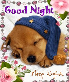Whatsapp a cute #goodnight wish to your #doglovers friends with this cute #puppy #ecard.