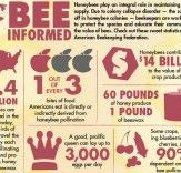 bees and hornets