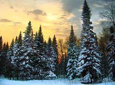Тайга — полоса сурового хвойного леса, состоящего из высокоствольных пород ели, сосны, лиственницы, кедра и пихты с примесью березы, осины, ольхи, а на востоке Сибири — благовонного тополя. Тайга составляет почти 90% площади всей лесной зоны, которая занимает более 1/3 территории России. Южная граница тайги совпадает с пределом распространения дуба, который в тайге не встречается. В европейской части России тайга простирается от Карелии до Урала, далее тянется через всю Сибирь, включая…