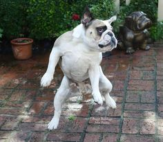 (1) Baggy Bulldogs - Timeline Photos