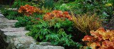 Dryopteris erythrosora 'Brilliance' (Autumn Fern) with Epimedium and Heuchera 'Caramel' in early spring Vertical Garden Design, Garden Landscape Design, Flowers Perennials, Planting Flowers, Shade Perennials, Small Gardens, Outdoor Gardens, Autumn Fern, Shade Garden Plants