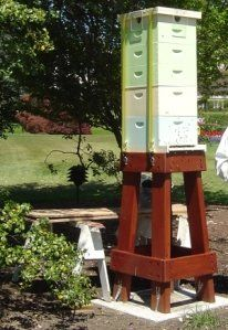 This year I want my hives up off the ground . . . this is the White House bee stand.