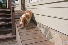 Ramp-Up a Wood Deck. Click on link http://www.houselogic.com/photos/outdoors/building-dog-run/slide/ramp-up-a-wood-deck/