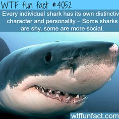 Sharks facts - WTF fun facts - There are much more to sharks than just being the perfect predator!