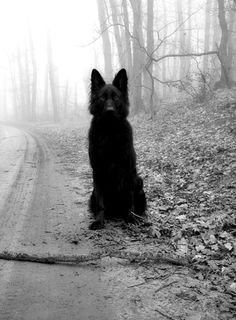 Mysterious. Love it. (I think it's a German Shepard tho, Idk where else to pin this. But I like grmn shprds too