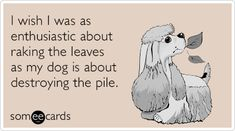 I wish I was as enthusiastic about raking the leaves as my dog is about destroying the pile. | Seasonal Ecard