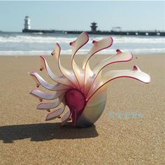 Rose Nautilus natural conch shell ornaments gifts Home Furnishing fossil rare collection of four famous.
