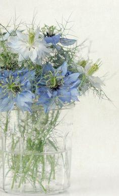 Light blue nigella for the powder blue