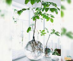 Pros amantes da decoração minimalista, esses vasos que deixam as raízes das plantas à mostra são uma opção linda!