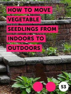 Can You Grow Poppy Plants From Grocery Store Poppy Seeds? Can You Grow Poppy Plants From Grocery Sto Growing Poppies, Planting Poppies, Lettuce Leaves, Garden Seeds, Grocery Store, Lush, Bloom, Poppy
