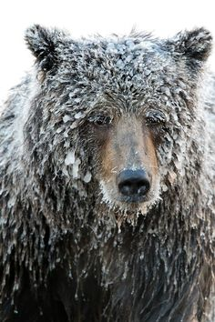 The Cold Stare Photo by Steven Williams — National Geographic Your Shot