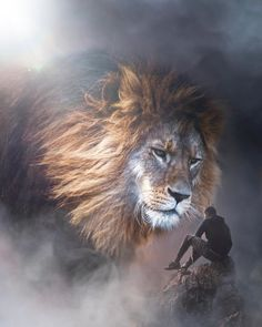 lion wallpaper * lion tattoo ` lion ` lion tattoo design ` lion king ` lion tattoo for women ` lion art ` lion quotes ` lion wallpaper Art Roi Lion, Lion King Art, Lion Art, Lion Live Wallpaper, Animal Wallpaper, Wallpaper Art, Lion Images, Lion Pictures, Jesus Pictures