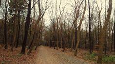 Hilveersum Forest
