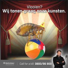 Maak geen vlooiencircus van uw woonkamer! Wij helpen u vlooien voorkomen, lees meer: http://bit.ly/vlooienbestrijding