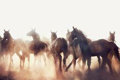 | gorgeous horses |