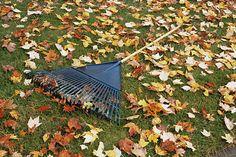 Trávnik na jeseň: Urobte všetko preto, aby bol pred zimou vo forme Backyard Gazebo, Garden Gazebo, Lawn And Garden, Garden Tools, Patio, Fall Plants, Indoor Plants, Reseeding Lawn, Kill Weeds Naturally