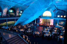 wedding reception in the oceanic wing of the museum of natural history