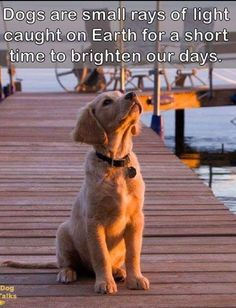 Dogs are the light of our days