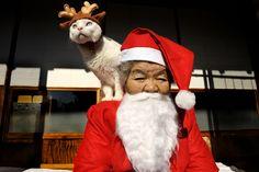 """""""Misao and Fukumaru""""  Copyright © Miyoko Ihara  http://imajinkgraphics.com/blog/miyoko-ihara/"""