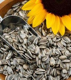 Semi di girasole: benefici per la salute e come mangiarli