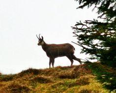 Amazing shot by my brother!! #deer #animals #wildlife #nature #like4like #woods #instalife #dayshots #hunt #wild #hunter #outdoors #valley #instanature #awesome_shots #nature_shooters #fallowdeer #fauna #animalsofinstagram #animali #mountain #runningfree #instanaturelover #hunting #huntingitaly #beautiful #roar #landscape #scenery by ste.dalnevo
