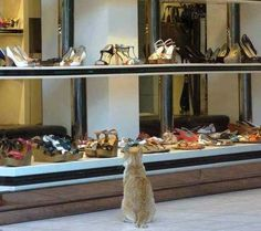 Shoes and cat, it's ultra fashion :-)