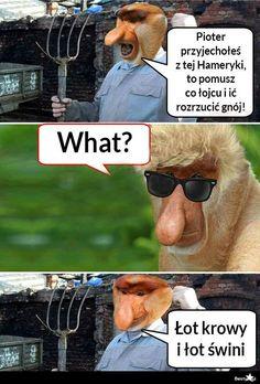 BESTY.pl - Kiedy Pioter wróci z Ameryki Polish Memes, Weekend Humor, Funny Mems, Meme Lord, Best Memes, Fnaf, Funny Animals, Haha, Jokes