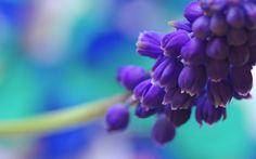 purple flowers background 7301