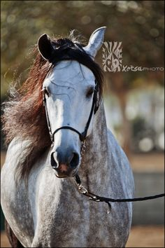 Gorgeous Grey by Crystal Philbrook, via 500px