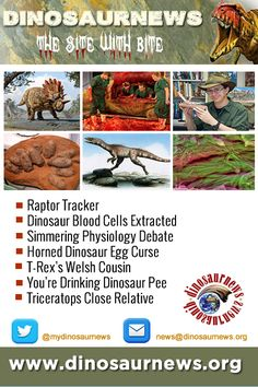 This Week - Raptor Tracker * Dinosaur Blood Cells Extracted * Simmering Physiology Debate * Horned Dinosaur Egg Curse * T-Rex's Welsh Cousin * You're Drinking Dinosaur Pee http://www.dinosaurnews.org #dinosaurs #news #dinosaurnews