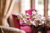 Red Room - Images | Christopher Heaney - Client Area Red Rooms, Luxury, Plants, Image, Red Bedrooms, Plant, Planets