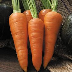 Carrot, Danvers OG (SSE): Leading main crop variety for home and market . . . .  (makes it less desirable)