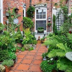 Your winner for our People's Choice is Richard Small with his courtyard garden i. - Your winner for our People's Choice is Richard Small with his courtyard garden in Tyne and Wear.