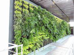 #green #greenwall #verticalgarden #livingwall