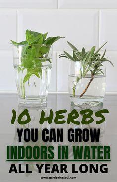 Indoor Vegetable Gardening, Home Vegetable Garden, Herb Garden, Container Gardening, Garden Plants, Indoor Plants, Indoor Herbs, Garden Bar, Rooftop Garden